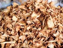 Getrocknete Pilze Lizenzfreies Stockfoto
