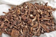 Getrocknete Pilze Lizenzfreies Stockbild