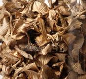 Getrocknete Pilze Lizenzfreie Stockfotografie
