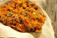 Getrocknete Ringelblumeblumen Stockbilder