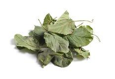 Getrocknete Rohstoffe der medizinischen Kräuter auf Weiß Blätter von lizenzfreies stockbild