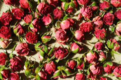 Getrocknete rosafarbene Knospen Lizenzfreies Stockfoto