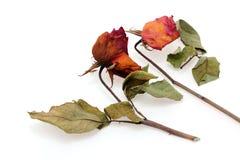 Getrocknete rosafarbene Rosen Stockfotos