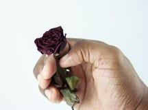 Getrocknete Rose in der Hand gehalten lizenzfreie stockfotografie