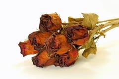 Getrocknete Rosen Stockfoto
