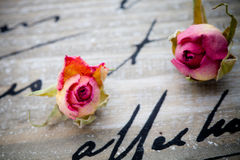 Getrocknete Rosen Lizenzfreies Stockbild