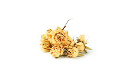 Getrocknete Rosen lizenzfreie stockbilder