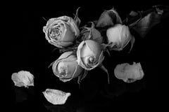 Getrocknete Rosen auf schwarzem Hintergrund Stockfoto