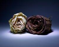Getrocknete Rosen auf Veilchen Stockfotografie