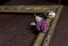 Getrocknete Rosen in einem Rahmen lizenzfreie stockfotos
