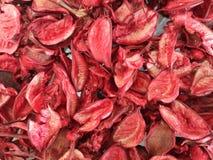 Getrocknete rote Blumen masern und kopieren stockfoto