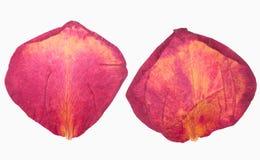 Getrocknete rote rosafarbene Blumenblätter Lizenzfreie Stockbilder