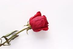Getrocknete Rotrose auf dem Tisch lizenzfreie stockfotografie