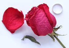 Getrocknete Rotrose auf dem Tisch, petai und Ring Stockfotografie