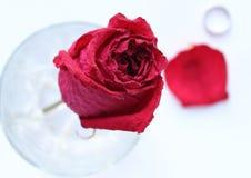 Getrocknete Rotrose im Glas, im petai und im Ring Stockfotografie