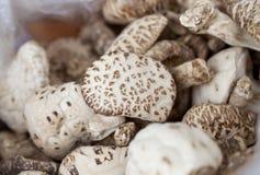 Getrocknete Shiitake-Pilze (Lentinula-edodes) Stockbild