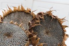 Getrocknete Sonnenblumenköpfe Stockfotos