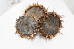 Getrocknete Sonnenblumenköpfe Stockfotografie