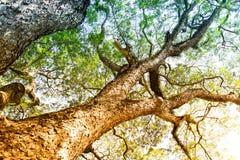 Getrocknete Stammpfosten rudern mit grünen Bäumen im Wald stockfotografie