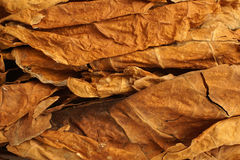 Getrocknete Tabakblätter als Hintergrund Lizenzfreie Stockfotos