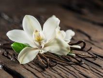 Getrocknete Vanillestöcke und Vanilleorchidee auf Holztisch stockbild