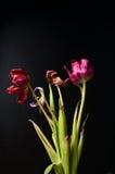 Getrocknete zerbröckelnde Blumen auf einem schwarzen Hintergrund Stockfotos
