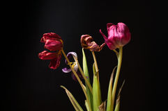 Getrocknete zerbröckelnde Blumen auf einem schwarzen Hintergrund Stockbild