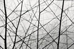Getrocknete Zweige Stockbild