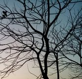 Getrockneter Baum Stockfoto