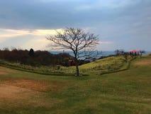 Getrockneter Baum in der Herbstsaison stockfotografie
