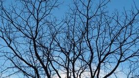 Getrockneter Baum gegen blauen Himmel Stockbild