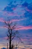 Getrockneter Baum mit Dämmerungshimmel Stockfoto
