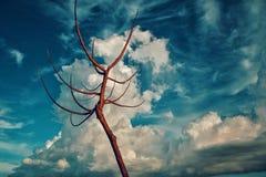 Getrockneter Baum und merkwürdige Wolke Stockfotos