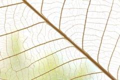 Getrockneter Blattzusammenfassungsblumenhintergrund lizenzfreies stockbild
