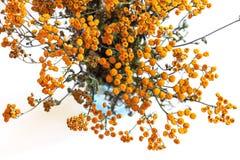 Getrockneter Blumenstrauß des Kräuterwermuts und des Tansy Lizenzfreies Stockfoto