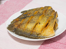 Getrockneter Fried Snake Skin Gourami Fish, Thailand-Anruf Lizenzfreies Stockbild
