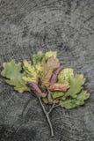Getrockneter Herbstlaub mag eine Baumform auf hölzernem Hintergrund Lizenzfreies Stockfoto
