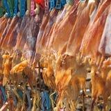 Getrockneter Kalmarabschluß oben stockfoto