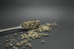 Getrockneter Koriandersamen im hölzernen Löffel auf unscharfem Hintergrund lizenzfreies stockfoto