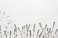 Getrockneter Lavendel lokalisiert auf weißem Hintergrund Lavendelschablonen-Hintergrundmodell Stockbilder