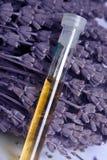 Getrockneter Lavendel und Schmieröl lizenzfreie stockbilder