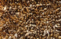 Getrockneter Mais Lizenzfreies Stockbild