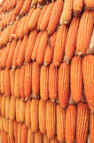Getrockneter Mais Lizenzfreies Stockfoto