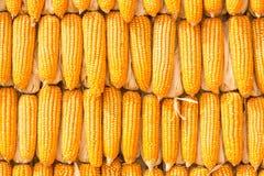 Getrockneter Mais Stockfotografie