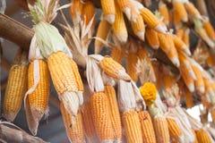 Getrockneter Mais auf Pfeilern hing am Strahl Stockfoto