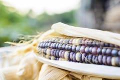 Getrockneter Mais für das Züchten, thailändischer Mais Stockbild