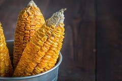 Getrockneter Mais-Stiel im Eimer stockbild