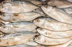 Getrockneter Makrelen-, getrockneter oder gesalzenerfisch Stockfoto