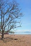 Getrockneter-oben Baum Lizenzfreie Stockfotos