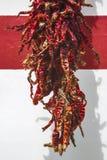 Getrockneter Paprika Stockbilder